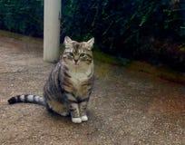 Kitty grasso fotografia stock libera da diritti