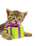 Kitty with green gift box Royalty Free Stock Image