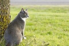 Kitty gris et blanc Photos libres de droits
