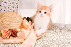 Kitty with hat Royalty Free Stock Photos