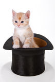 Kitty in a hat Stock Photos