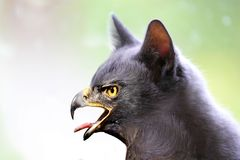 Kitty Hawk, Hersenschim stock afbeelding