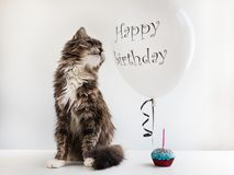 Kitty and helium balloon with birthday greetings. Cute, sweet kitty, white, helium balloon with birthday greetings and cupcake with candle. White, isolated royalty free stock photography