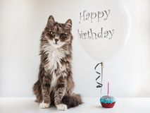 Kitty and helium balloon with birthday greetings. Cute, sweet kitty, white, helium balloon with birthday greetings and cupcake with candle. White, isolated royalty free stock photo