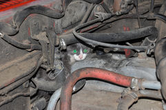 Kitty hiding from the dogs, inside the motor, Argentina Stock Images