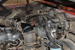 Kitty hiding from the dogs, inside the motor, Argentina Royalty Free Stock Photography