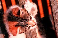 Kitty hugs railing in Odessa, Ukraine Royalty Free Stock Photos