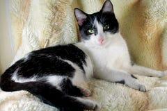 Kitty Jenni Photos libres de droits