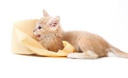 Kitty jouant avec du papier hygiénique Photo stock