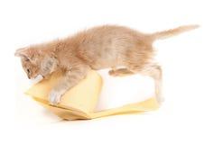 Kitty jouant avec du papier hygiénique Photographie stock