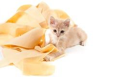 Kitty jouant avec du papier hygiénique Photos stock