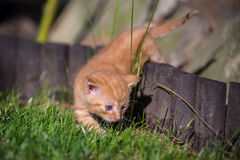 Kitty jouant sur l'herbe photo stock