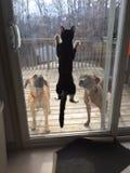 Kitty Jump Stock Foto's