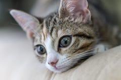 Kitty Kat curiosa Fotografia Stock Libera da Diritti