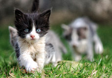 Kitty-leader leads his friends on grass Stock Photos