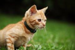 Kitty Royalty Free Stock Image