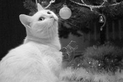 Kitty. A little Christmas moment at home Royalty Free Stock Image