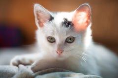 Kitty. Little white kitty pretty portrait royalty free stock photos