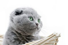 Kitty look up Royalty Free Stock Photo
