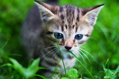 Kitty looking down in front of grass Royalty Free Stock Photos