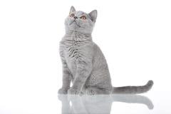 Kitty looking up Stock Photos