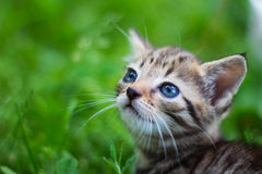 Kitty looking up in front of grass. Kitty curiously looking up in front of grass Stock Photos