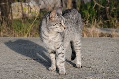 Kitty louche au soleil photo libre de droits