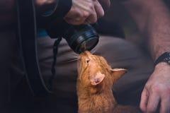 Kitty Loves Camera fotografia de stock royalty free