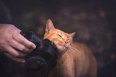 Kitty Loves Camera imagens de stock
