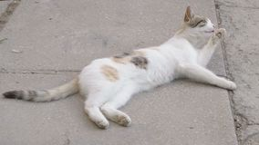 Kitty lying on the ground and licked.  stock footage