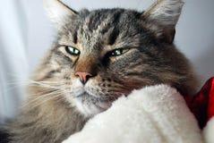 Kitty Lying op Santa Hat Royalty-vrije Stock Afbeeldingen