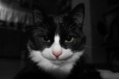 Kitty malo Imagen de archivo libre de regalías