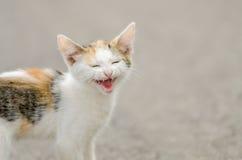 Kitty Meow Lizenzfreies Stockbild