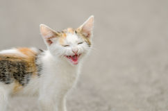 Kitty Meow. Close Up Photo Royalty Free Stock Image