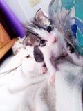 Kitty mignon sur la serviette Photo libre de droits