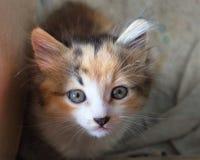 Kitty mira tristemente para arriba la colina fotos de archivo libres de regalías