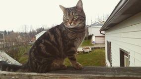 Kitty modelo Fotos de archivo libres de regalías