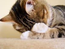 Kitty nap Royalty Free Stock Photo
