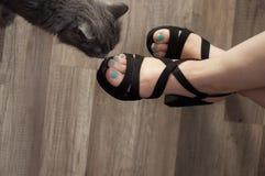 Kitty nuzzle el pie femenino Imagen de archivo