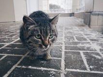 Kitty outdoor royalty free stock photos