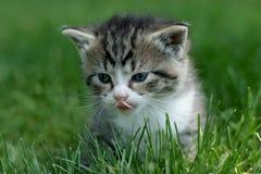 kitty łowiecka Zdjęcia Royalty Free