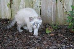 Kitty par la barrière Photo stock