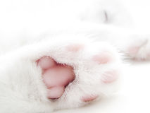 Kitty paw Royalty Free Stock Image