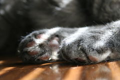 Kitty paws Royalty Free Stock Photo