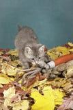 Kitty paws at garden tool. Royalty Free Stock Photos