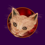 Kitty peludo Fotos de archivo