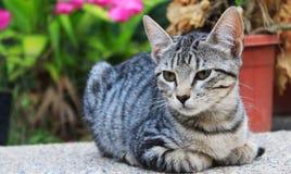 Kitty pensant dans son rêve Photographie stock libre de droits