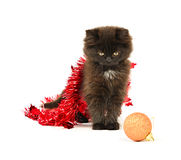 Kitty play with Christmas decorations. On white background Stock Image