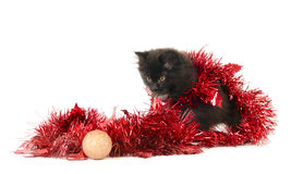 Kitty play with Christmas decorations Royalty Free Stock Images