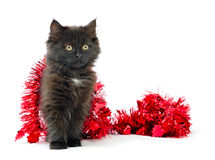 Kitty play with Christmas decorations. On white background Royalty Free Stock Photos